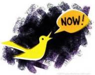 canary-1